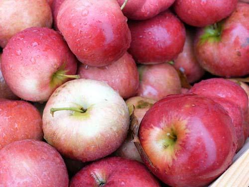 apple cider making