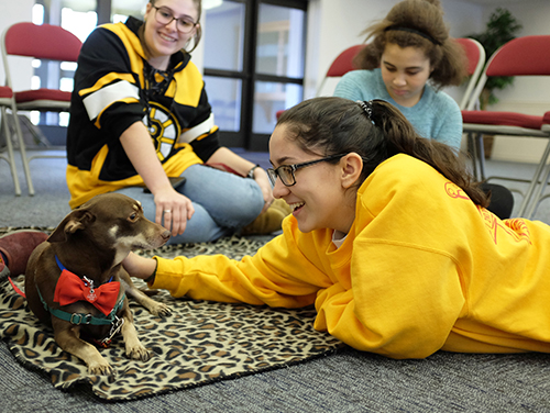 Monadnock Therapy Dogs